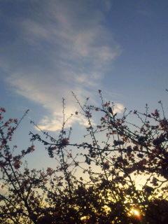 春便り…続き