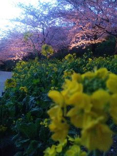 春便り…ライトアップ