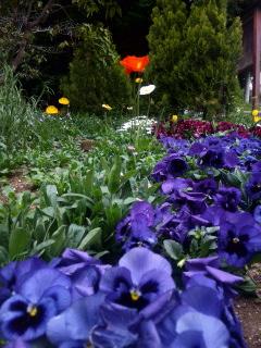 春盛り〜芹ケ谷にて