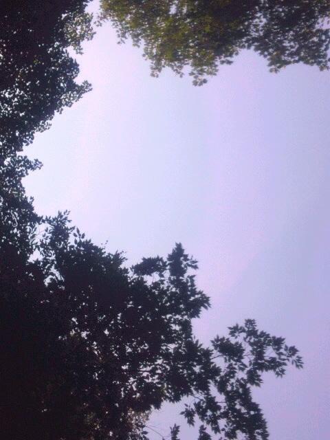 梅雨の晴れ間