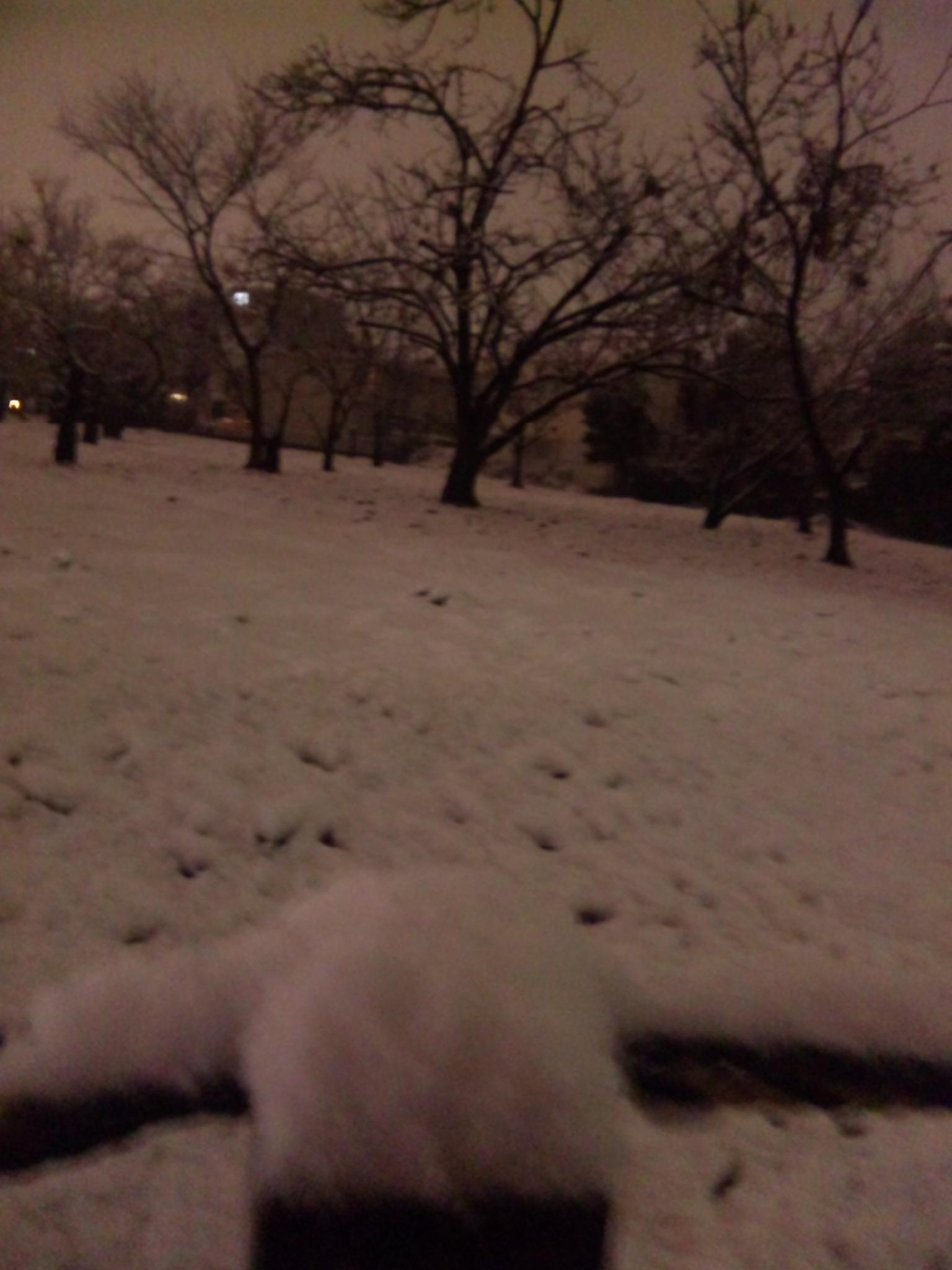 雪、雪、雪!!