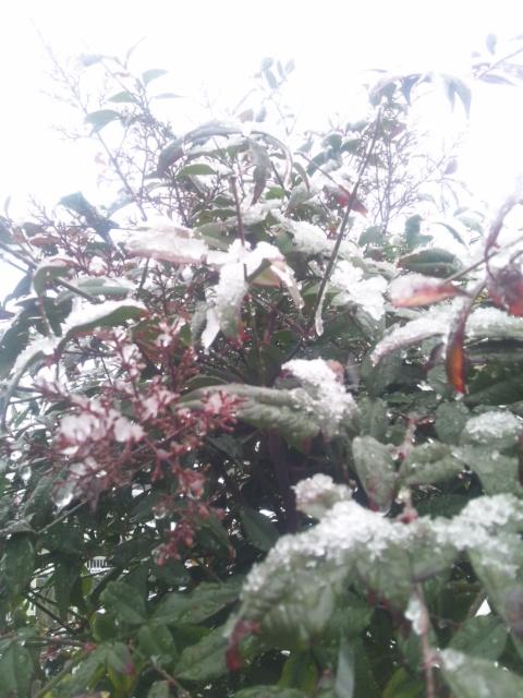 またまた雪です!