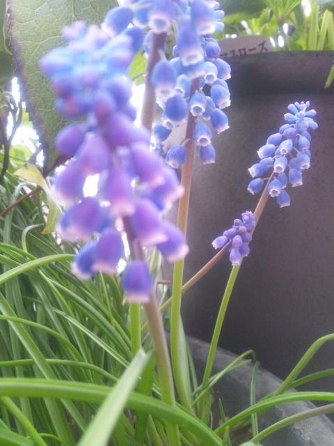 春、真っ盛り