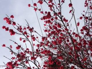 桜めぐり〜番外編