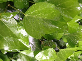 雨の花歩き